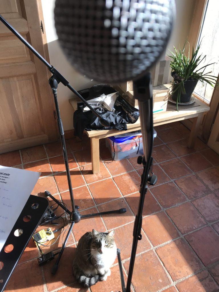 un chat me fixe pendant que je chante dans mon micro.